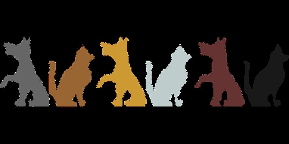 L'assurance santé animale : la demande va-t-elle exploser?